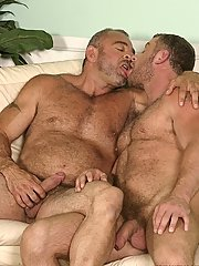 Two excited bears engulf eachothers jocks and rub eachothers hairy chests