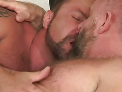 Two bear daddies take up with the tongue in bed