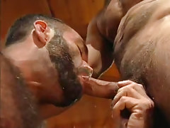 Bear dilf sucks appetizing cock