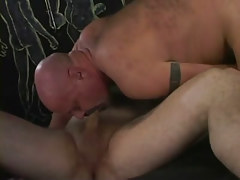 Bear calm homosexual blowing delicious cock